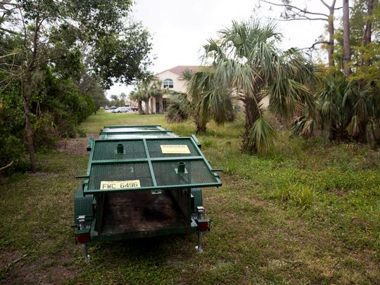 A bear trap is armed by the Florida Fish and Wildlife