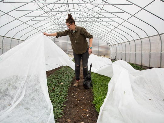 In this Monday, Dec. 11, 2017 photo, Jenny Quiner, owner of Dogpatch Urban Gardens uncovers lettuce plants in her greenhouse in Des Moines, Iowa. Dogpatch Urban Gardens is the only for-profit farm in Des Moines city limits — the realization of one of Quiner's dreams.
