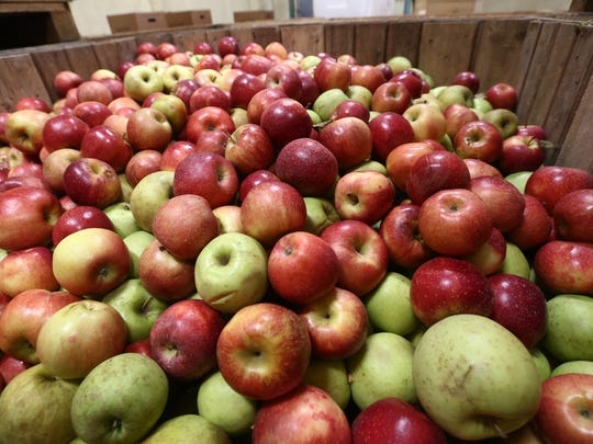 A crate of apples in cold storage at Fishkill Farms
