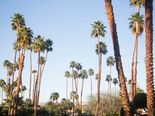 indian wells wants residents to remove old palm trees