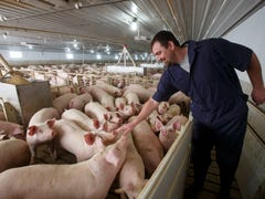 Will tariffs force expanding Iowa, U.S. pork industry to reverse gears and downsize?