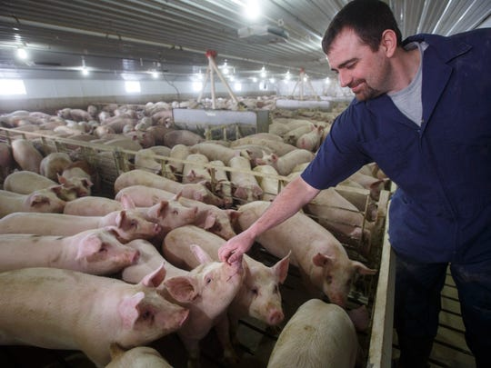 Pig farmer Trent Thiele works with pigs at a 2400-head concentrated animal feeding operation near his house in Elma, Iowa on Feb. 21, 2018.