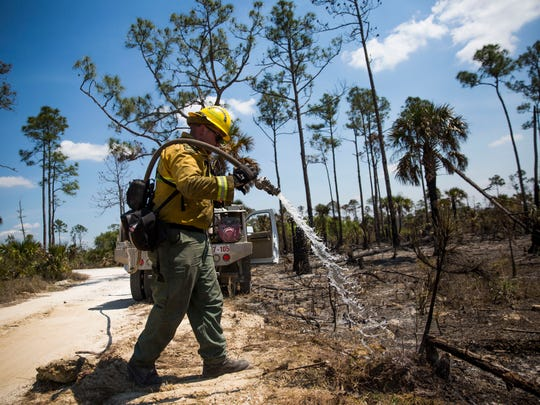 Roger Ness, a forest ranger, mops up hot spots on Sable Palm Road during Greenway Fire in Picayune Strand State Forest on Monday, March 26, 2018.