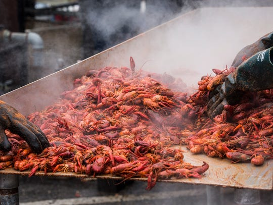 April 15, 2018 - Cooked crawfish are transferred to