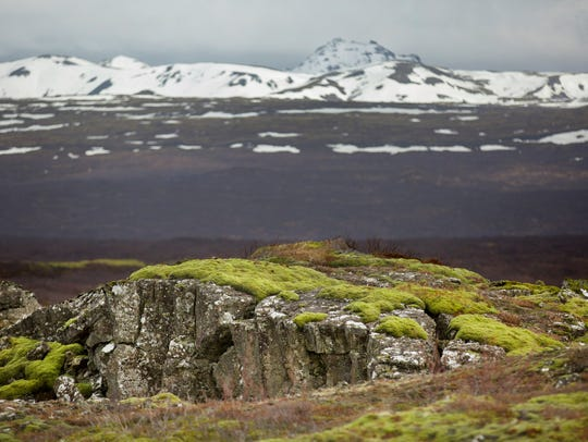 Iceland's famous moss