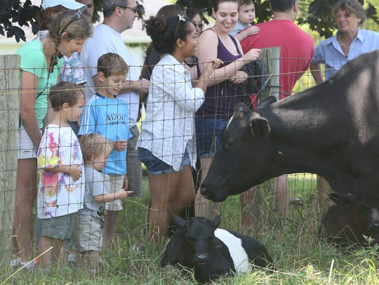 People visit the cows at Hilltop Hanover Farm in Yorktown