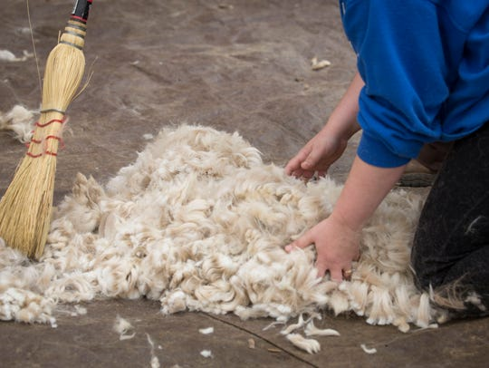 A pile of fiber is gathered as it comes off of an alpaca