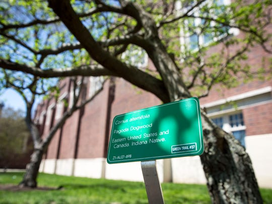 Different trees across Ball State University make up the arboretum which consists of nearly 7,000 trees of 250 different types. The trees along with their identification signs can be seen across five tree trails around campus.