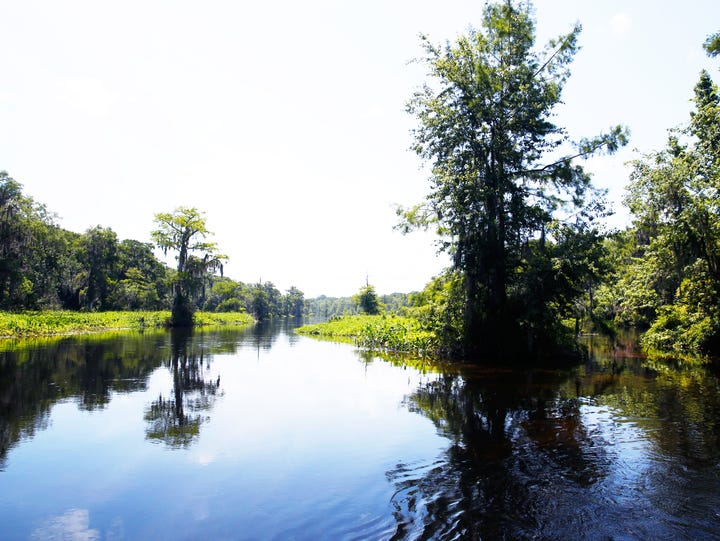 Wakulla Springs produces more than 300 million gallons