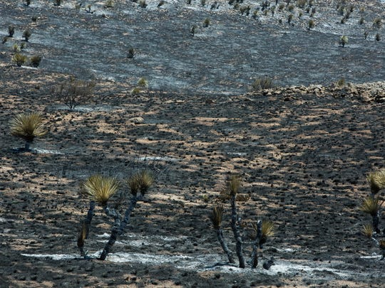 The scorched ground off of Highway 70 near San Augustin Pass as a result of the Organ Fire as it continues to burn Tuesday June 26, 2018. The estimated scorched acreage has increased from 600 on Monday to roughly 1,200 on Tuesday, said Bureau of Land Management fire information officer Rico Smith.