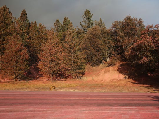 A section of Highway 243 is stained with fire retardant on July 26 during the Cranston Fire.