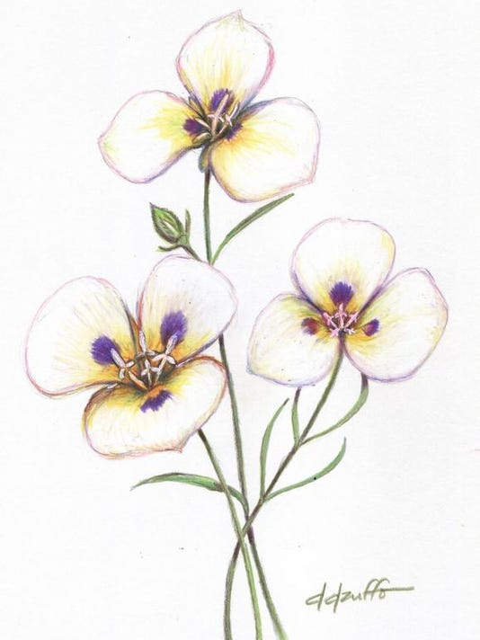 Mariposa Lilly 5x7.jpg