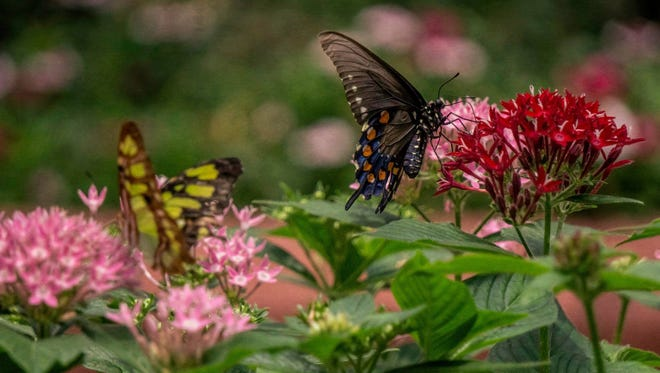 The Panhandle Butterfly House will remain at Navarre Park, at least for now, Santa Rosa County Commissioners decided Monday.