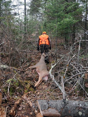 The most common way to haul out deer is to simply tie on a rope and pull them out with brute strength.