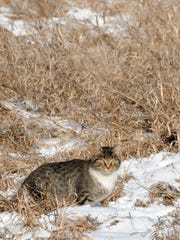 Feral cats cause widespread problems in rural, urban and suburban settings. They not only spread diseases like toxoplasmosis, but kill an estimated 2.4 billion birds and 12.3 billion mammals each year in the United States.