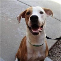 Name your price to adopt dogs, cats at HALO Animal Rescue in Phoenix
