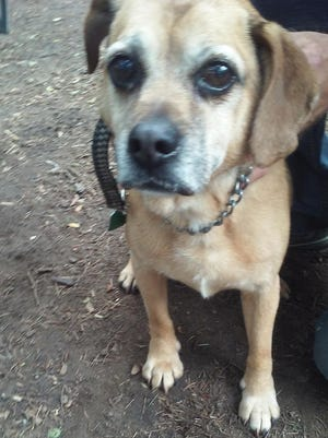 This adoptable 11-year-old dog will be on hand at Mutts and Mutts Rescue League's yard sale.