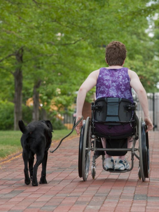 Which service dog breed is best for your needs?