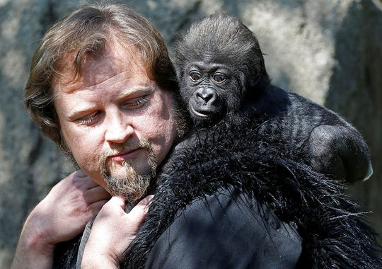 baby-gorilla-4_3.jpg