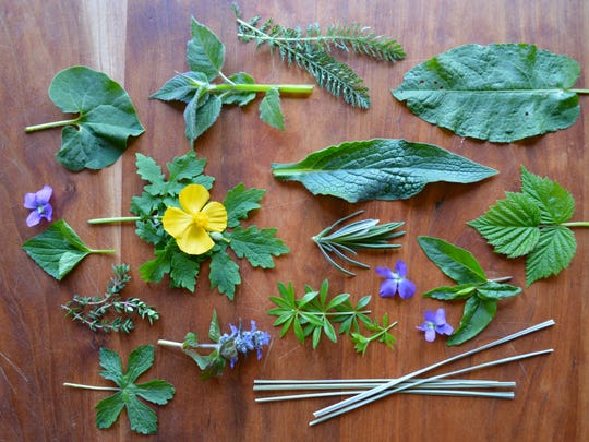 Medicinals from the author's garden.