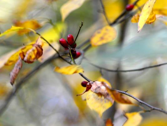 Fall colors nature walk