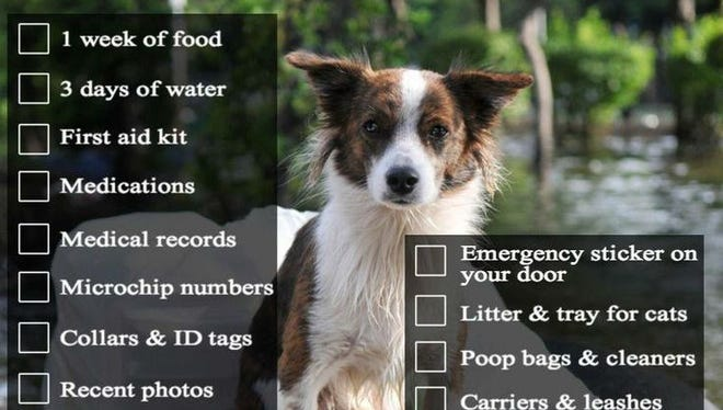 Remember to plan for your pet if a potential hurricane may be heading your way.