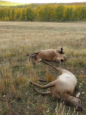 Authorities are seeking information in the case of two elk that were illegally killed on Cedar Mountain on Sept. 30, 2016.