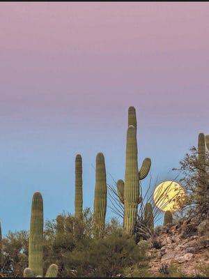 Fans visiting Phoenix can enjoy some breathtaking views at Arizona Sonora Desert Museum in Tucson.
