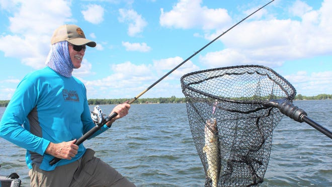 Rick Crowell admires a walleye he landed on a mid-August day on Mille Lacs Lake in Minnesota. Walleye and perch anglers have been just as successful this year on Lake Erie, often reaching their limit quickly.