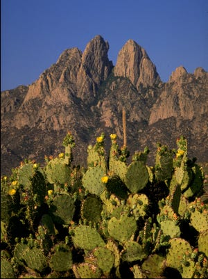 Cacti are among the plant species in the Organ Mountains-Desert Peaks National Monument. One project NMSU researchers have proposed is a vegetation map of various plant species within the monument.