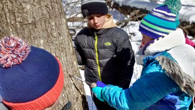 Students tap a tree for sap at Woodland Dunes Nature Center and Preserve in Two Rivers.