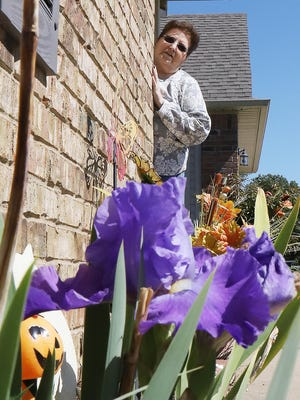 Gwen Allen looks out from the front porch at a purple iris growing in her flower bed, Tuesday, Sept. 29, on Mason St. in South Fort Smith. Allen said that she started the plant about five years ago but that this is the first time it's bloomed in the fall.