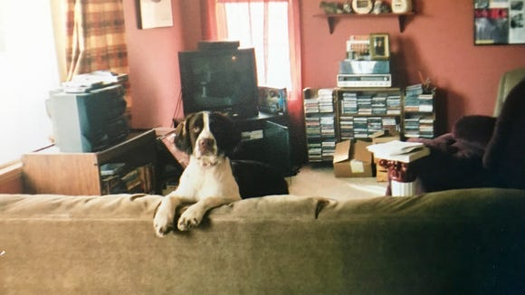As a puppy, Tiger could leap over the couch in a single