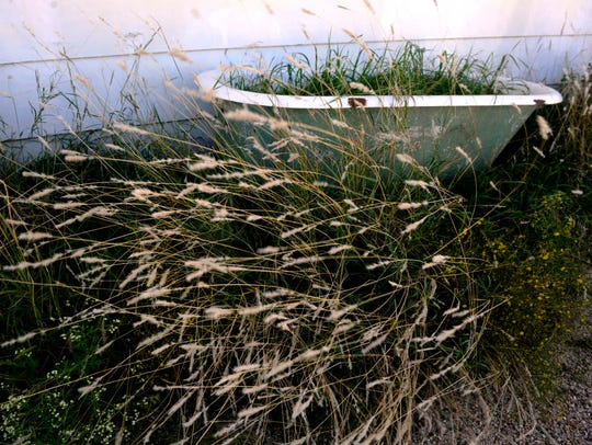 Grass fills an old bathtub in front of the original