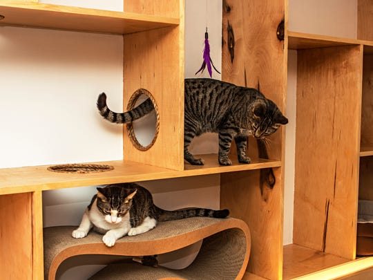 "Cats explore their territory at Meow Parlour, New York City's first ""cat cafe."""