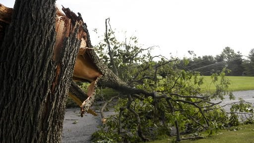 A tree fell in New Freedom during a severe storm in the summer of 2014.