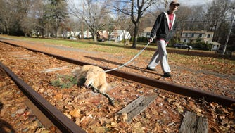 Tenafly resident Stuart Meistrich on a walk with his dog Sparkle as the dog takes a break to chew a stick on the abandoned train tracks.