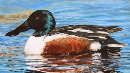 Adam Novey's artwork was chosen the 2014 Wisconsin Best of Show Junior Duck Stamp. Students have until March 15 to enter this year's contest.