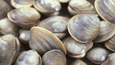 A Stuart man was arrested Monday, Dec. 18, 2017, after police said he called 911 twice about his order of clams from Crabby's Seafood Shack, at U.S. 1 and Palm City Road, being too small.