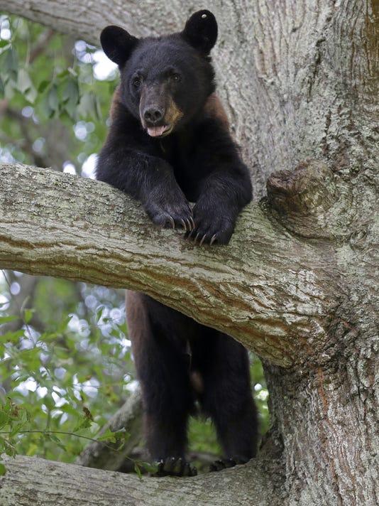 Neighborhood Bear