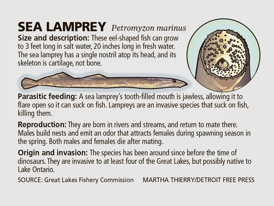 Crews Search Detroit River For Presence Of Sea Lamprey Larvae