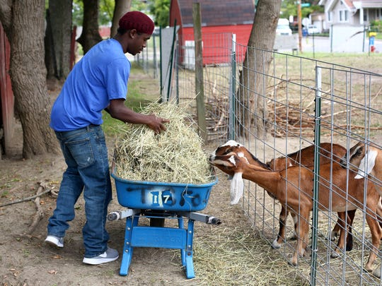 In a Saturday, Sept. 2, 2017 photo, Jabril Wyley, 19, feeds a few of the goats during a tour of Glass City Goat Gals, which is part of the Ohio Sustainable Farm Tour and Workshop Series in Toledo, Ohio.