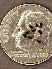 A group of Samurai wasps are pictured on top of a dime.