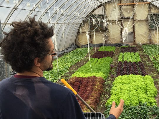 Is the future of vegetable farming indoors?