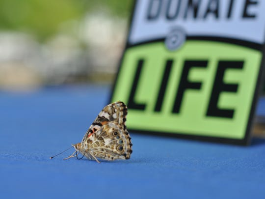 A butterfly released by the family of an organ donor during Thursday morning during a ceremony hosted by the Louisiana Organ Procurement Agency at Rapides Regional Medical Center.