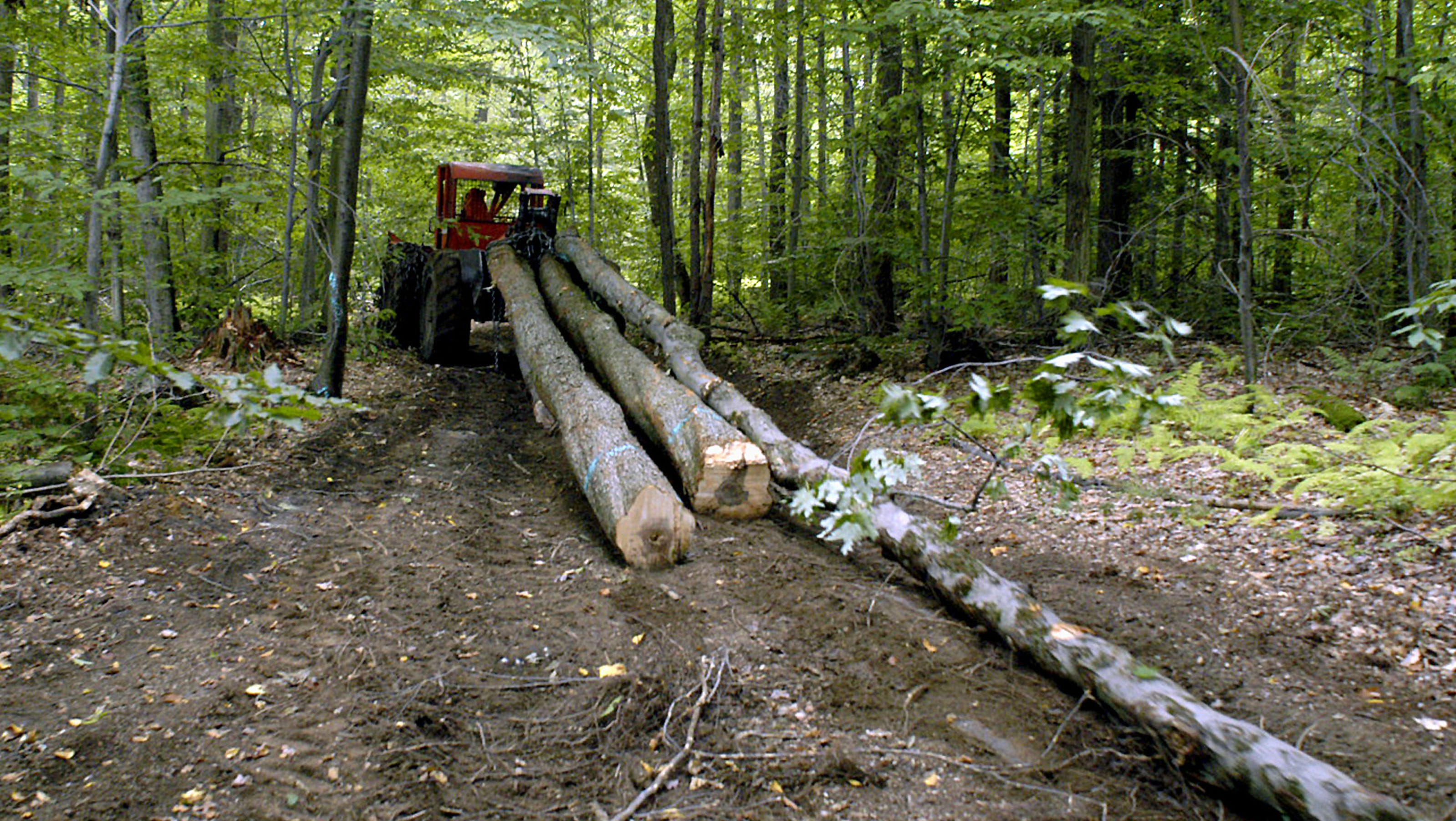 New Requirement For California Logging Companies