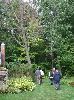 Image taken during Glenville outbreak of oak wilt.