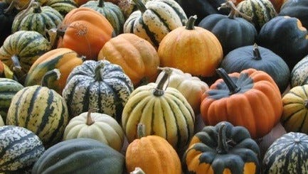 The farmers market brings the many colors of fall from Michigan fields and farms to downtown Farmington.