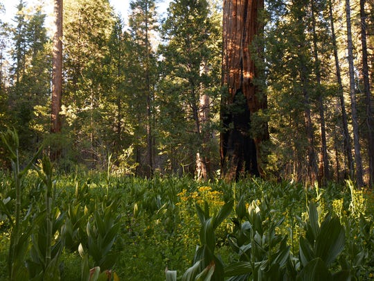 California's Giant Sequoia National Monument was established