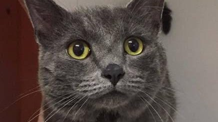 Hutch is described as a sweet cat that loves being scratched behind the ears.